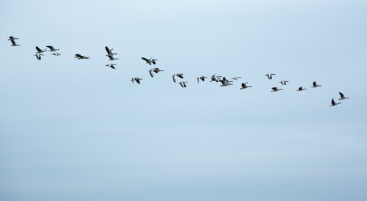 Image result for wild geese poem