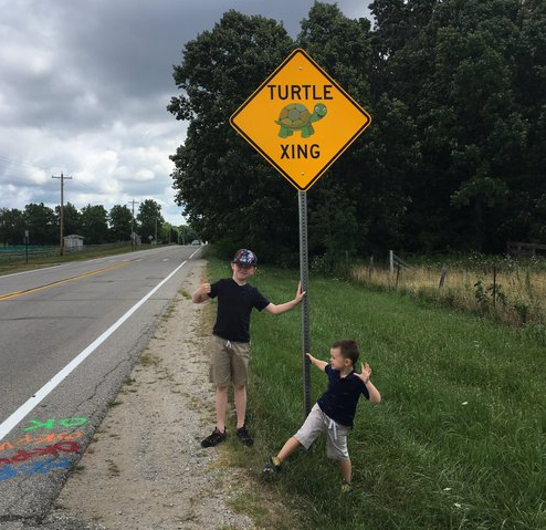 turtle crossing.png